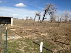 Our poor garden.